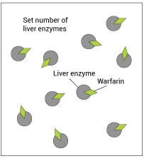 MM-warfarin1